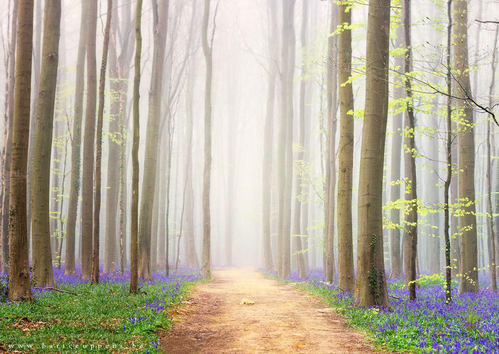 Un chemin dans la forêt de Bart Ceuppens